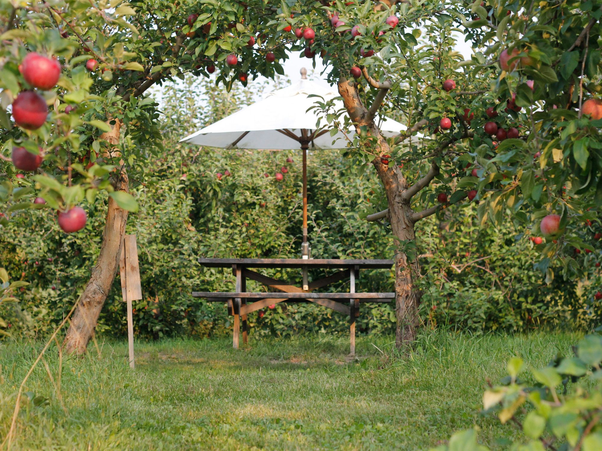 The Best Apple Picking In Every Region Of The U.s (View 10 of 20)