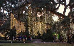 Hanging Outdoor Christmas Tree Lights